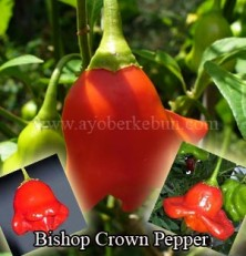 Jual Bishop's Crown Pepper seeds